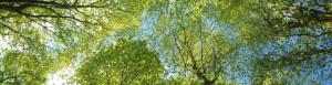 Gratitude Bioenergies in Nature @ Matheson Hammock Park | Miami | Florida | United States